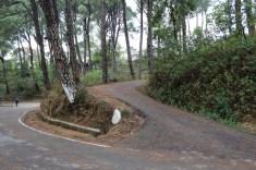 Dharamshala 2