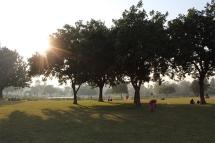 Rose Garden of Chandigarh